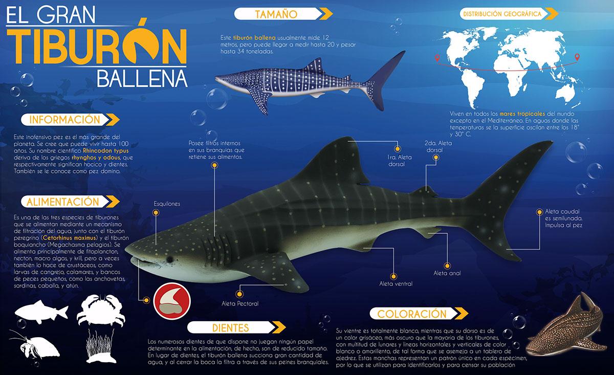 Bonito Anatomía Externa Tiburón Motivo - Anatomía de Las Imágenesdel ...