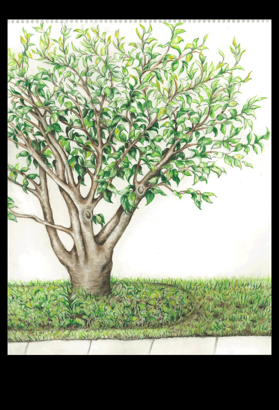 Summer Trees On Behance