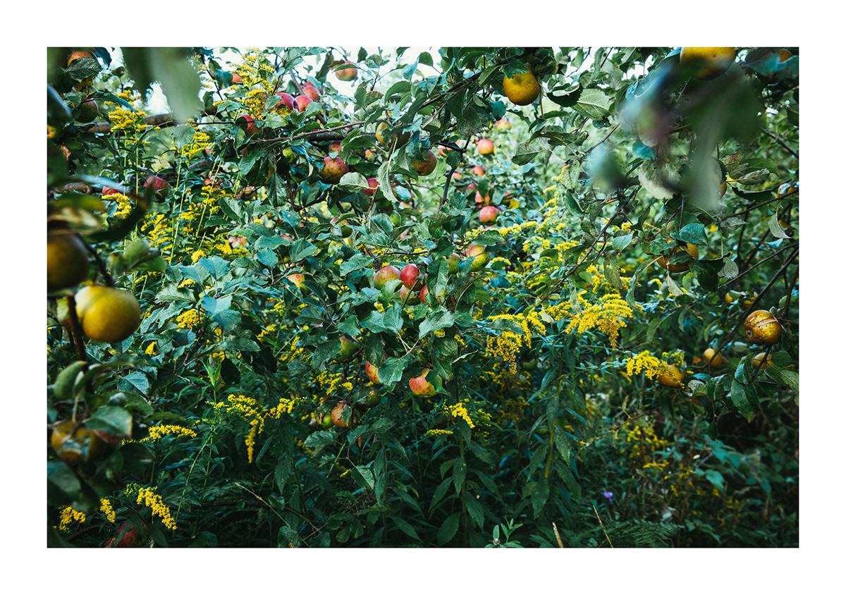 agriculture Biodiversité christian barthomeuf cidre Clos Saragnat livre pommes Quebec récit Photographie