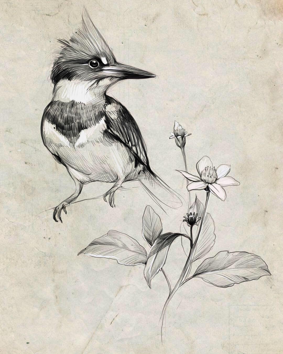 birds Nature sketching sketch pencil Pencil drawing digital drawing process pensil sketch plants tutorial process video video tutorial