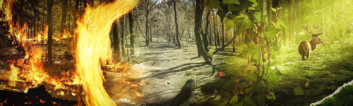 circleoflife award neuanfang forest grenn compositing composing adobe photoshop makitlayered contest winning