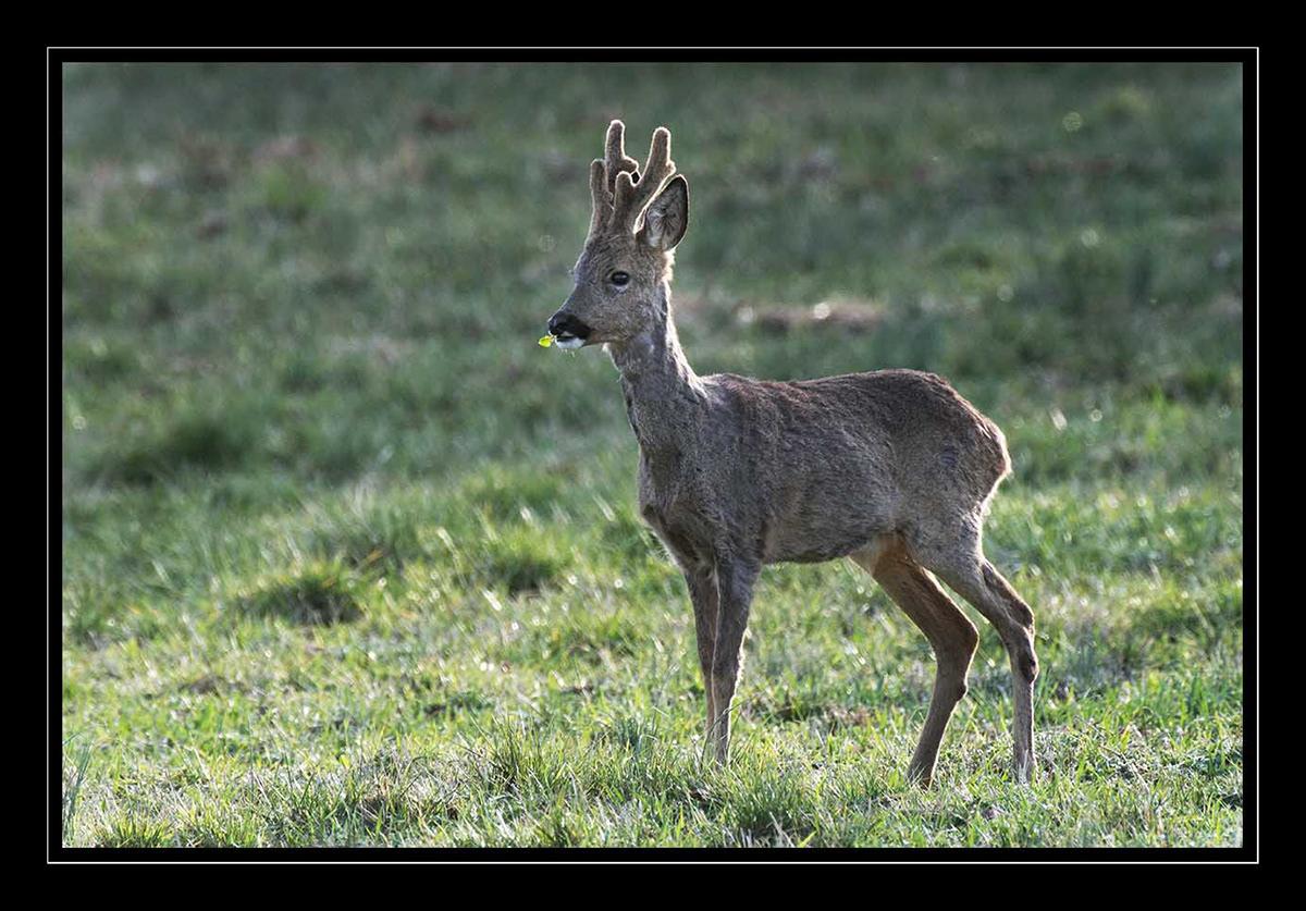 Image may contain: grass, animal and mammal