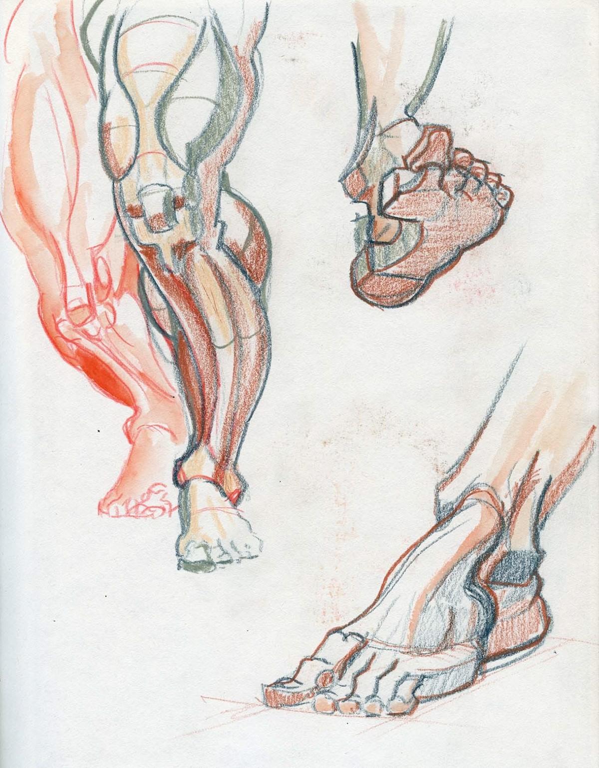 Anatomie Studien on Behance