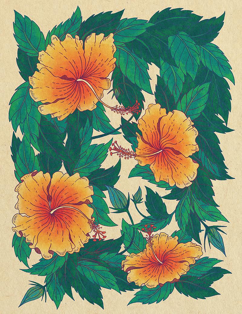 Hibiscus Flowers On Behance