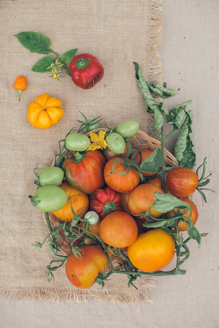 color eco farm Food  natural organic Photography  set vegetables