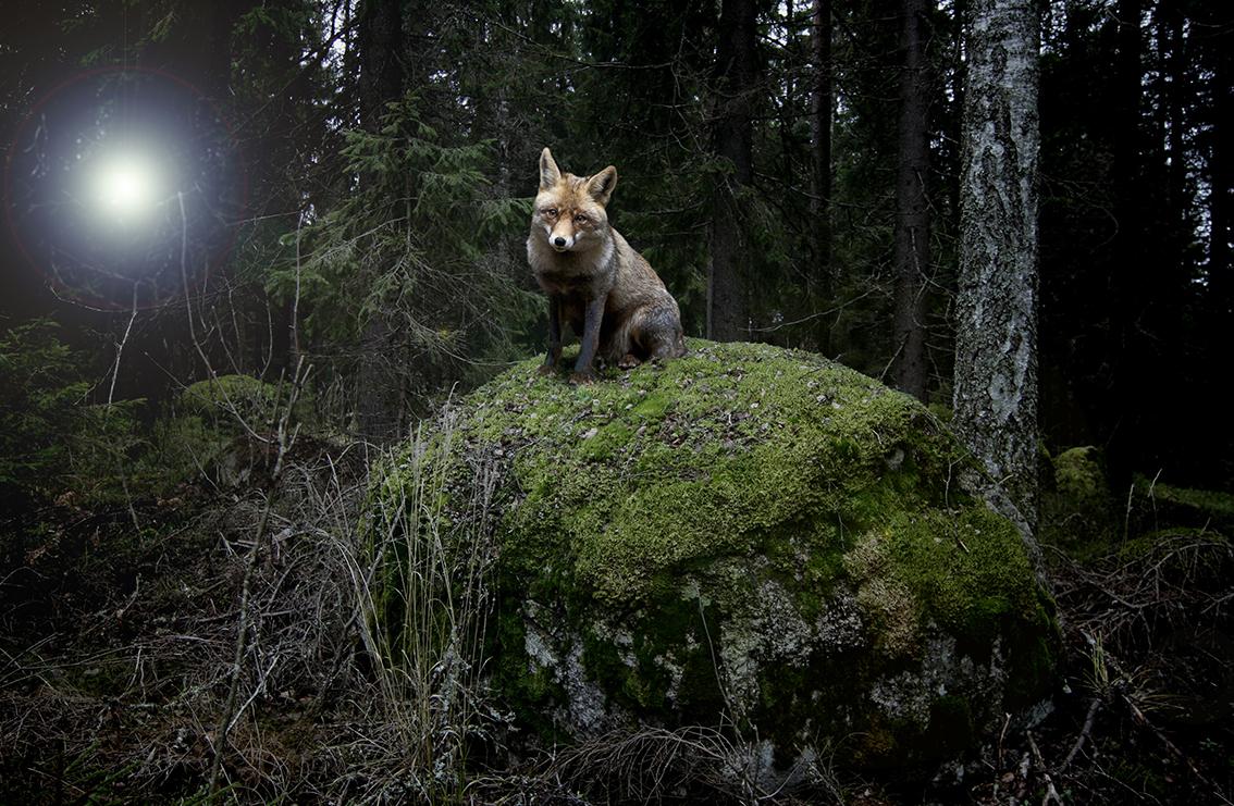 Adobe Portfolio strange Nature digital surreal