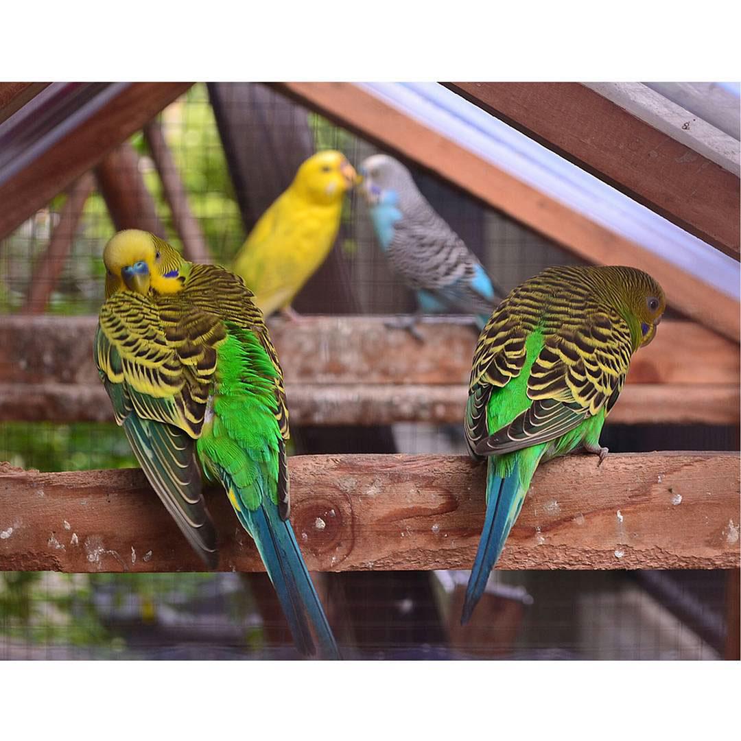 wildlife birds Nature Photography  photo candid romantic Love break up accidentally
