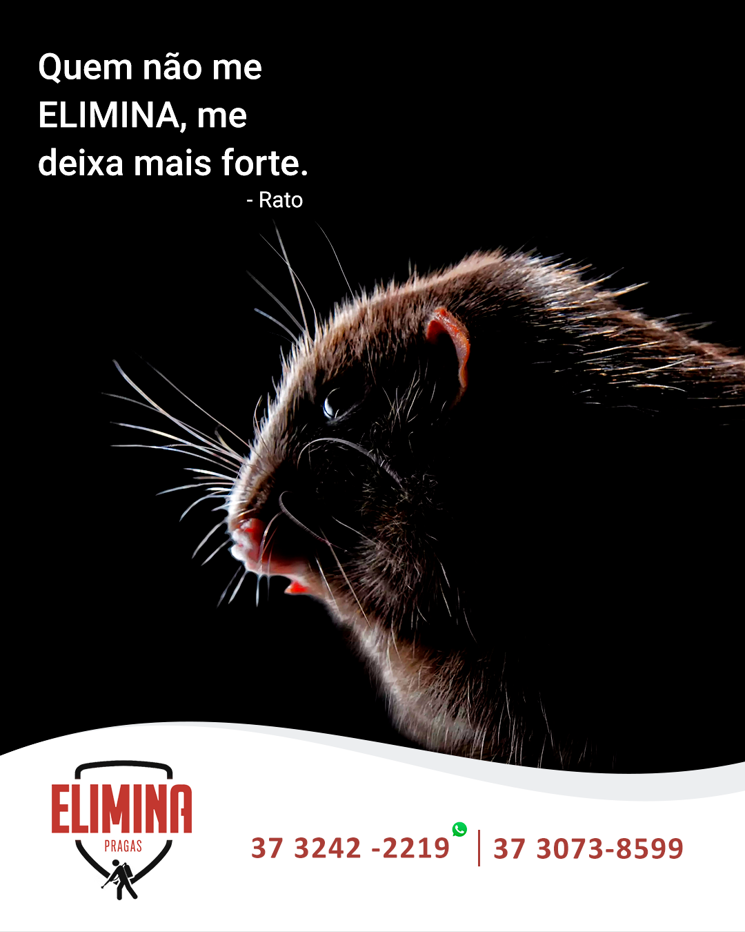 Image may contain: animal, mammal and cat