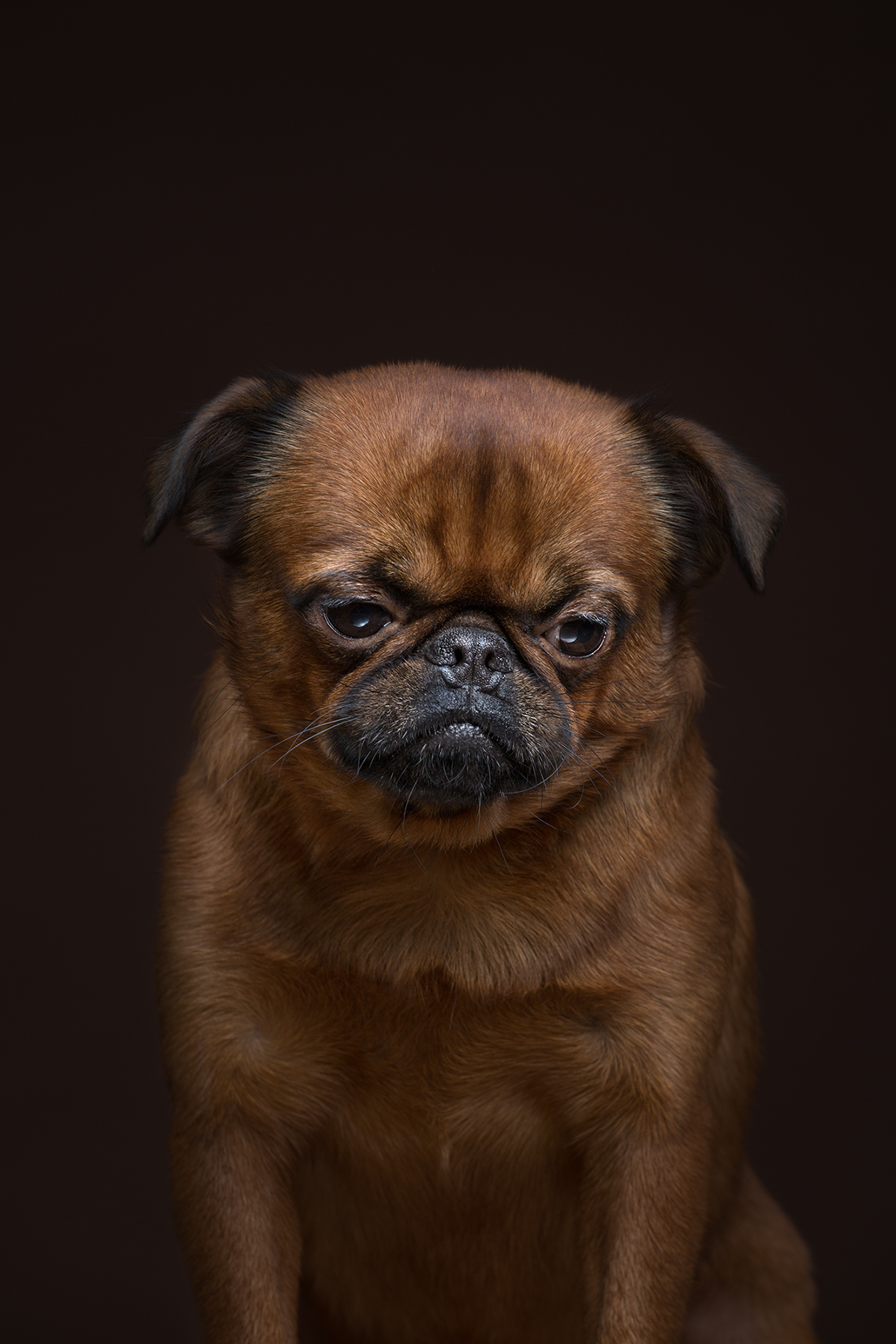 dogs dog breeds pets Photography