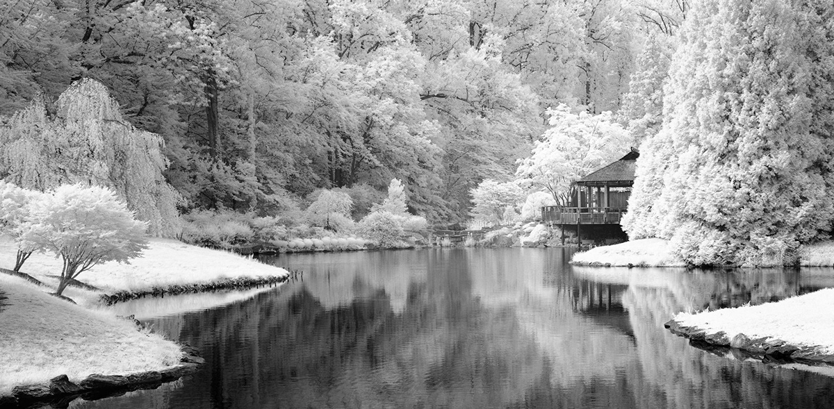 Black and white 720nm infrared image of trees around a pond during summer