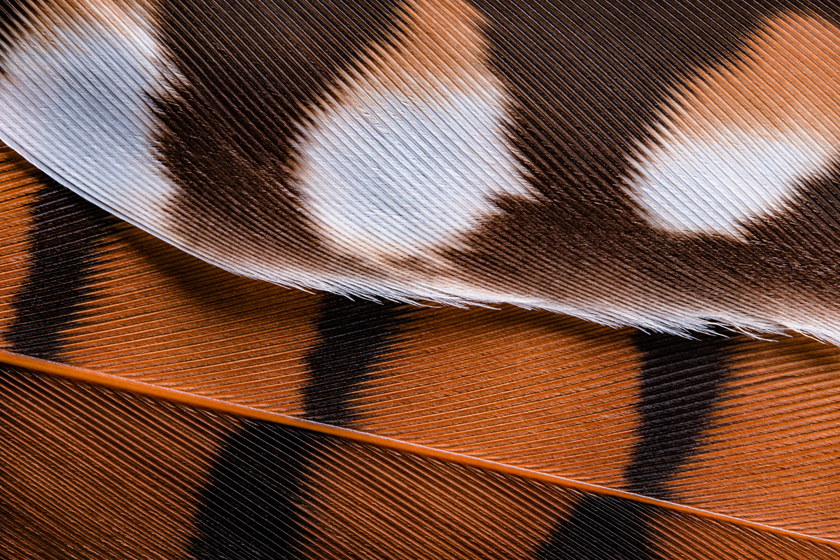 abstract macro photography of feathers from brazilian native birds