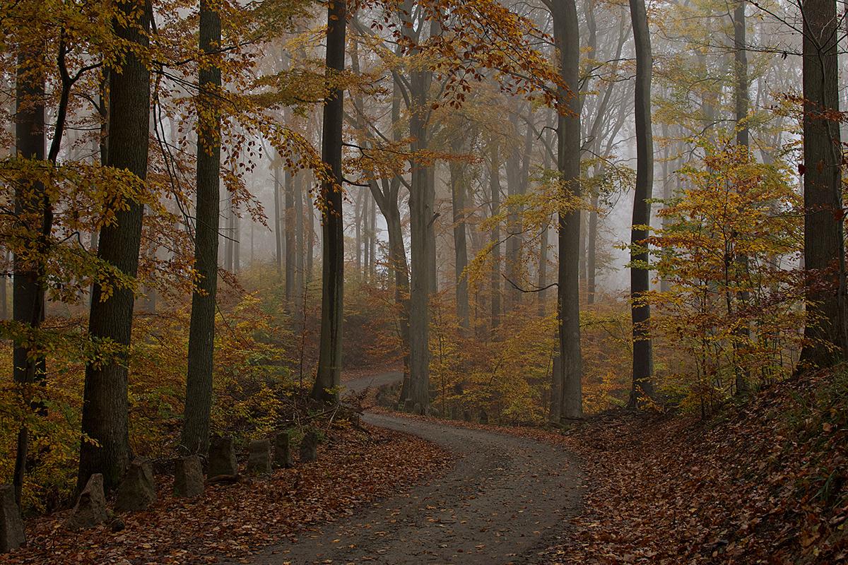 Leśna ścieżka w jesiennej mgle.