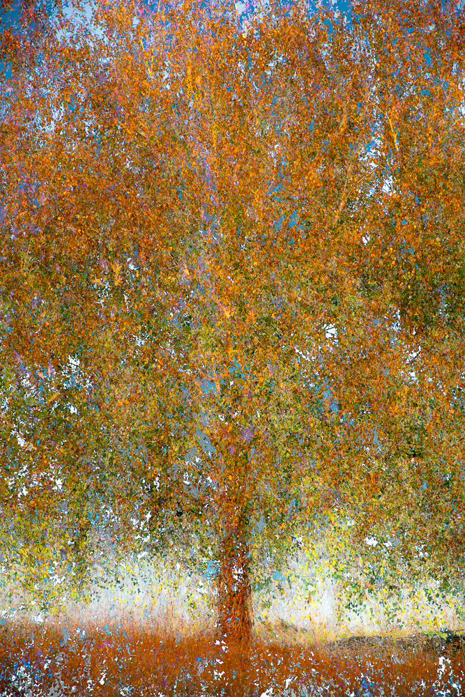 Photography  Nature impressionism ICM abstract contemporary art atmosphere multiple exposure Landscape
