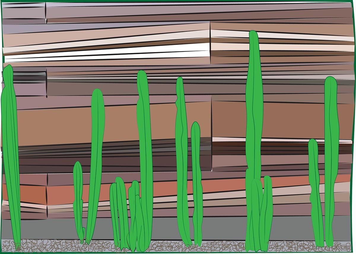 cactus,illustrations,cacti