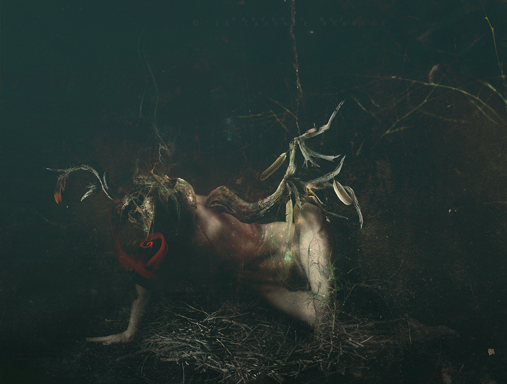 dark Dark Forest dark surrealism Metal art metal music photomanipulation skull surreal