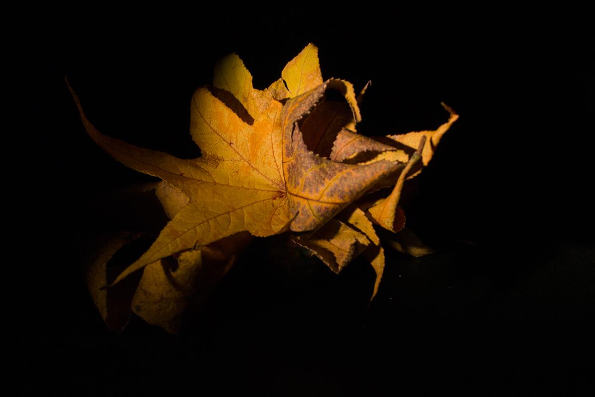 still life Fotografia producto low key Photography