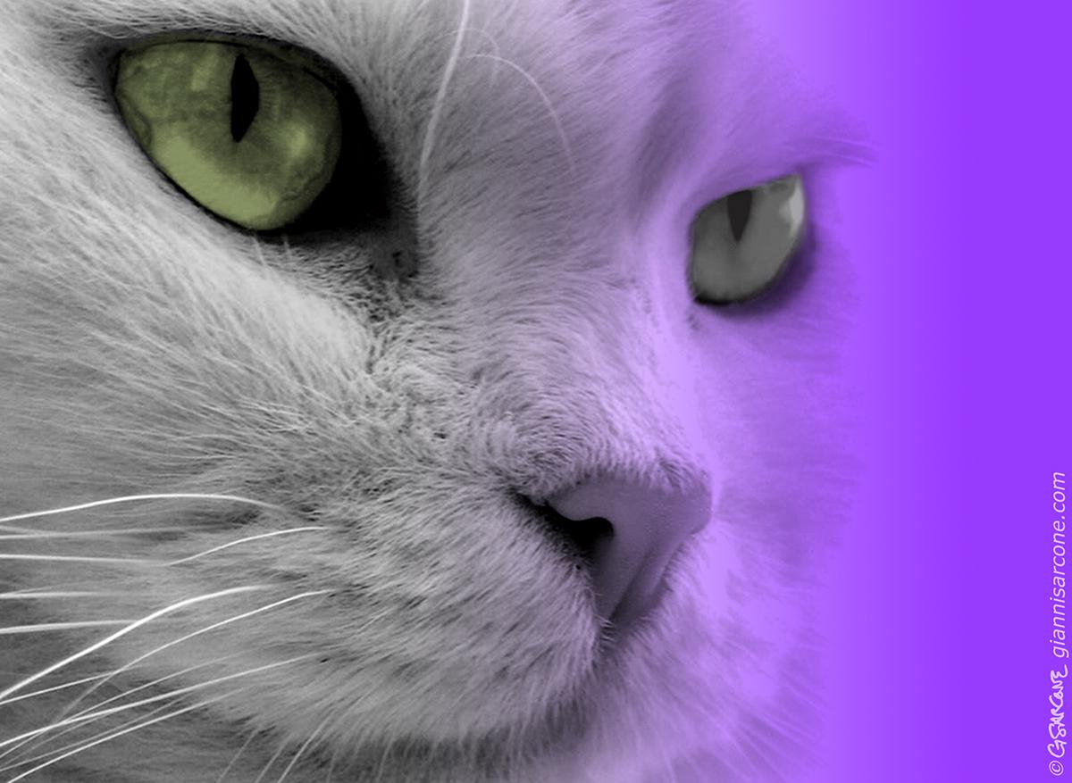 color shade tone Visual Experiment chromatic
