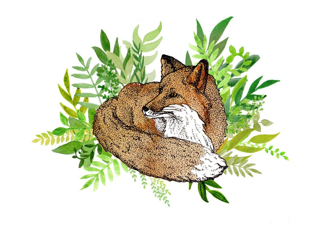badger barn owl FOX owl Red Squirrel squirrell