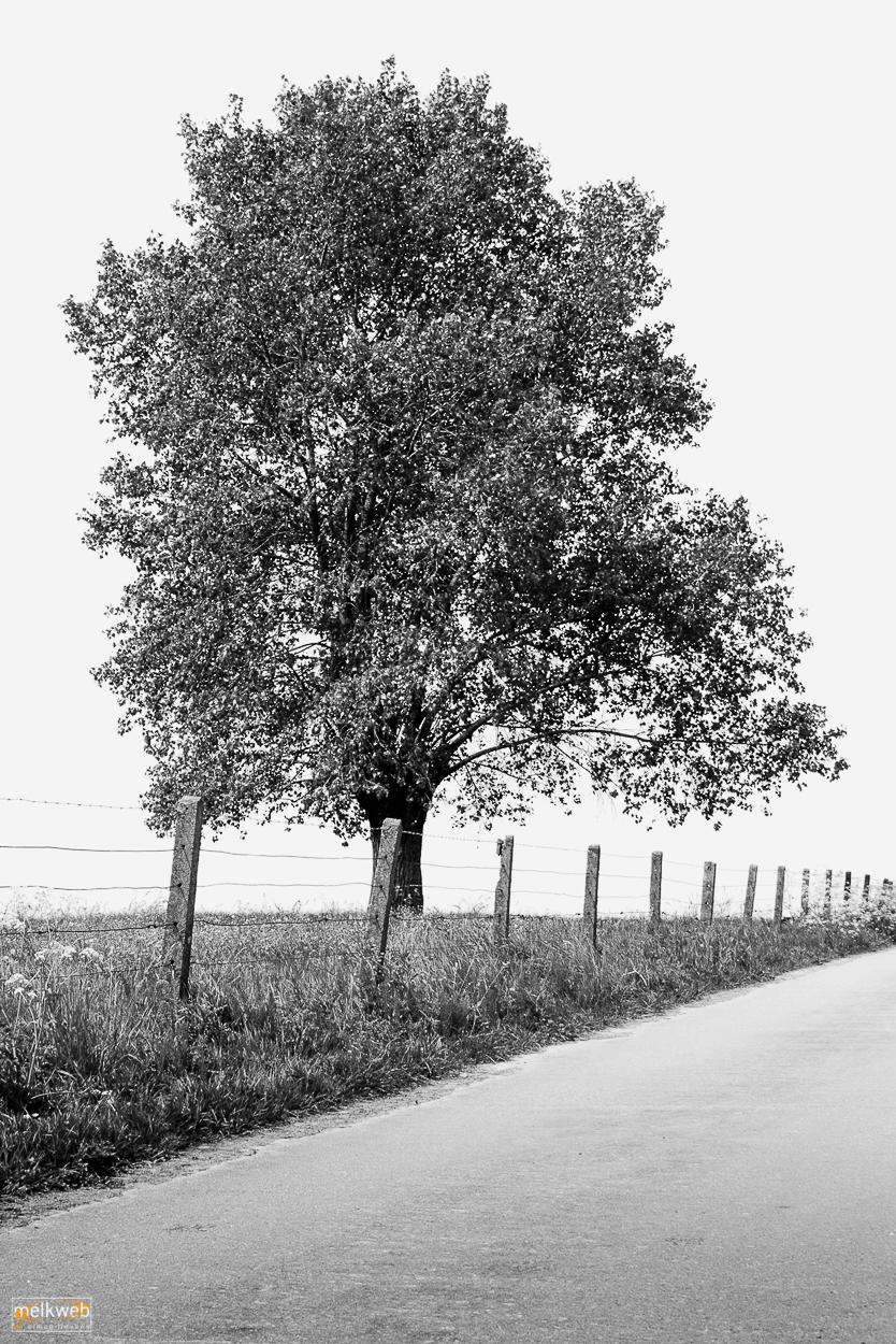 Adobe Portfolio trees Tree
