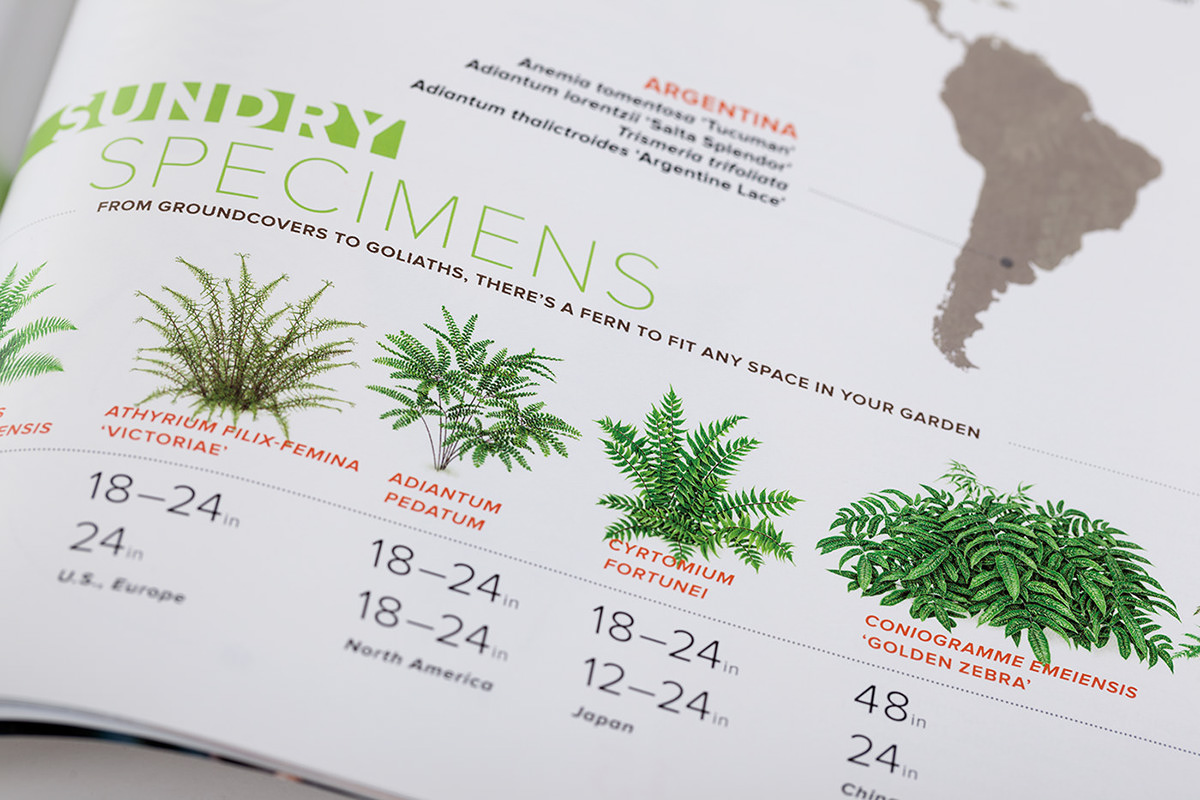 Ferns illustrations for garden design magazine on wacom for Garten design magazin