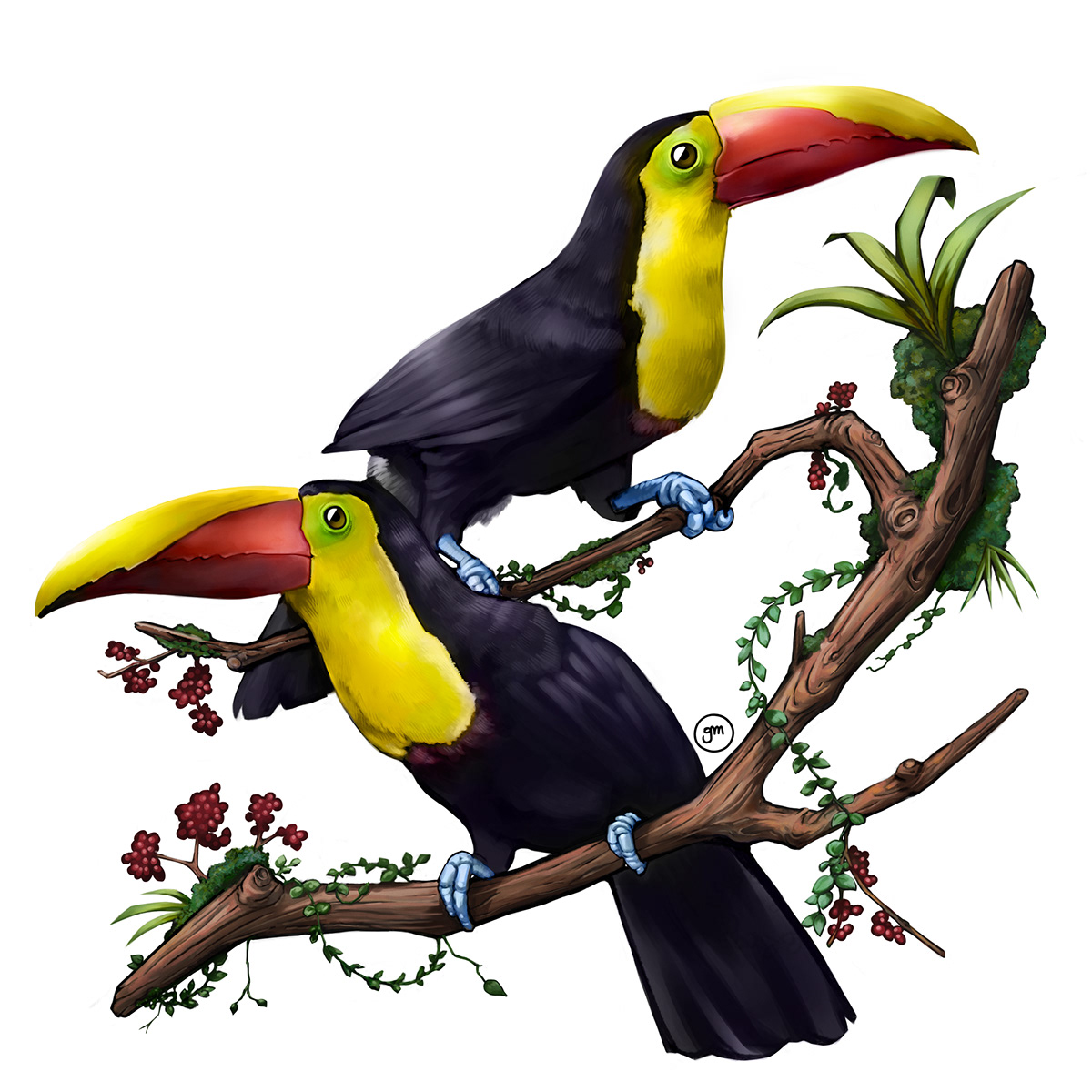 toco toucans digital painting