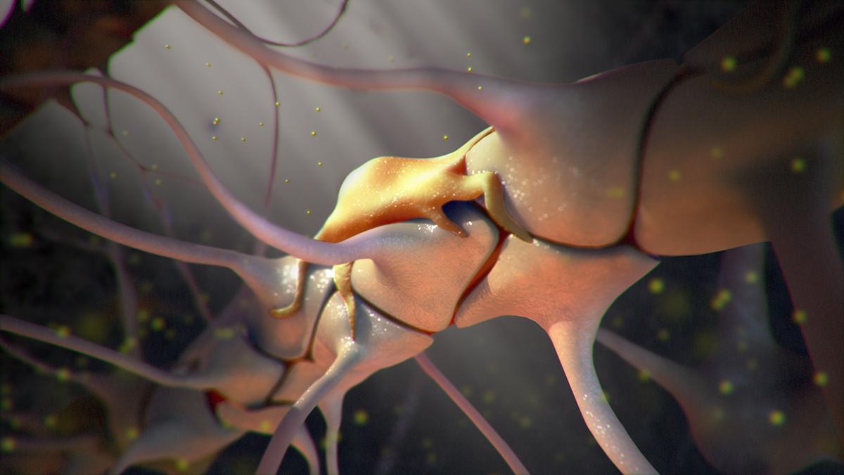 The Blood Brain Barrier