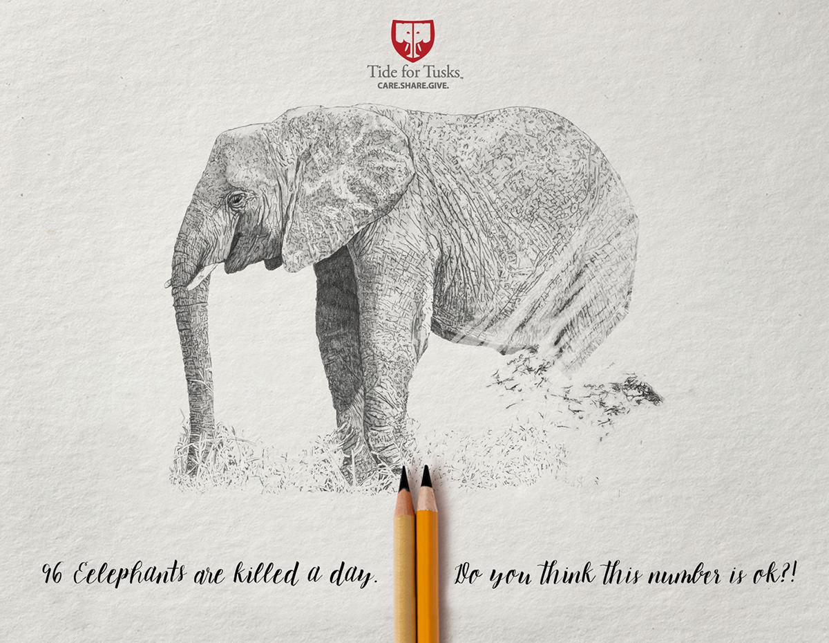 tide for tusks social media african elephants graphic design  ILLUSTRATION