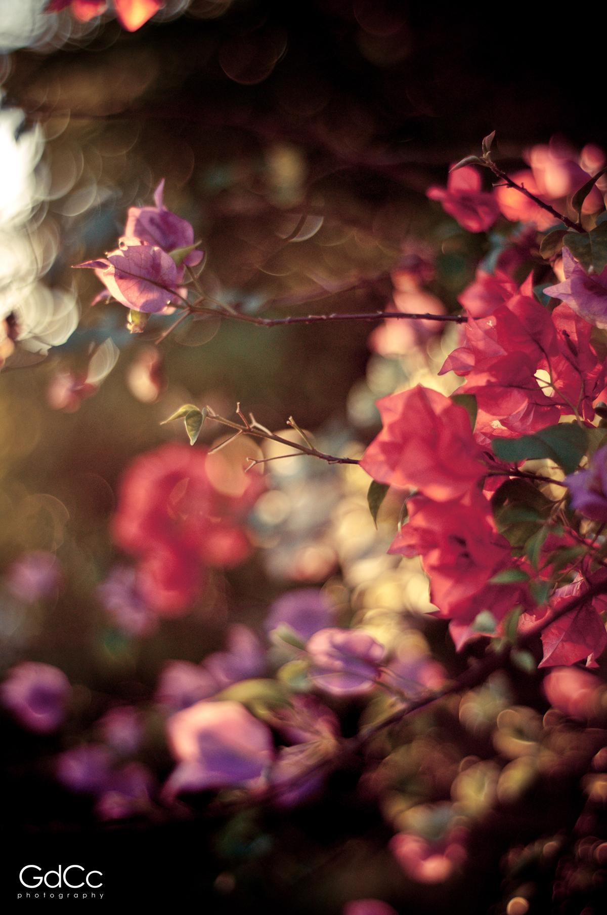 Nature floral photowalk daily life sunset SKY gradient sea summer