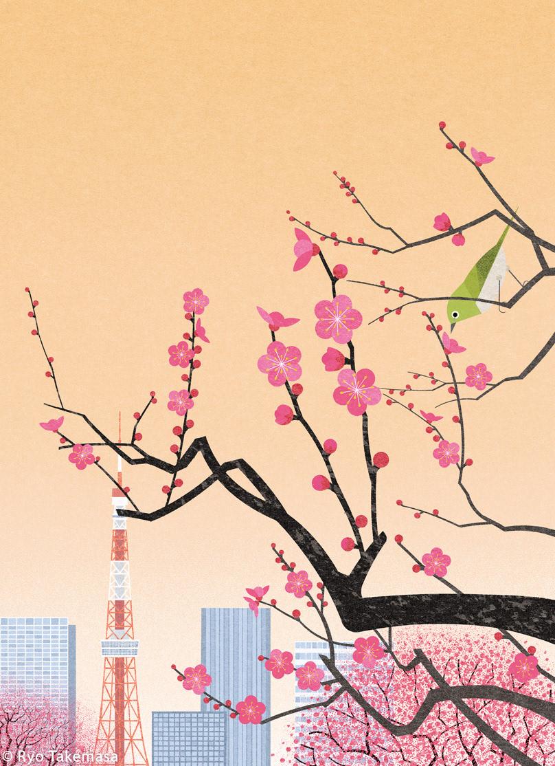 bloom blossoms flower japan Landscape spring tokyo Tree  ume Ume blossoms