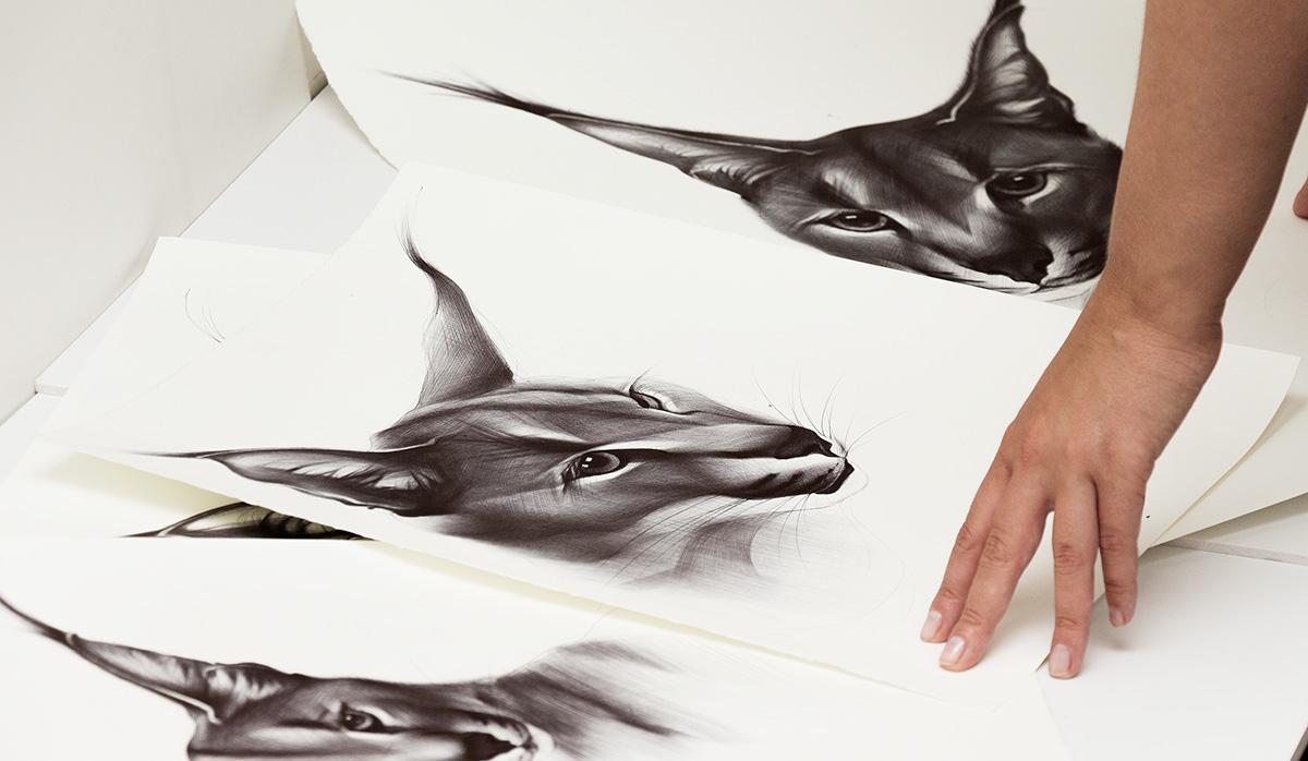 ballpoint pen Caracal animals classic drawing cats sketching wild animals yelena yefimova
