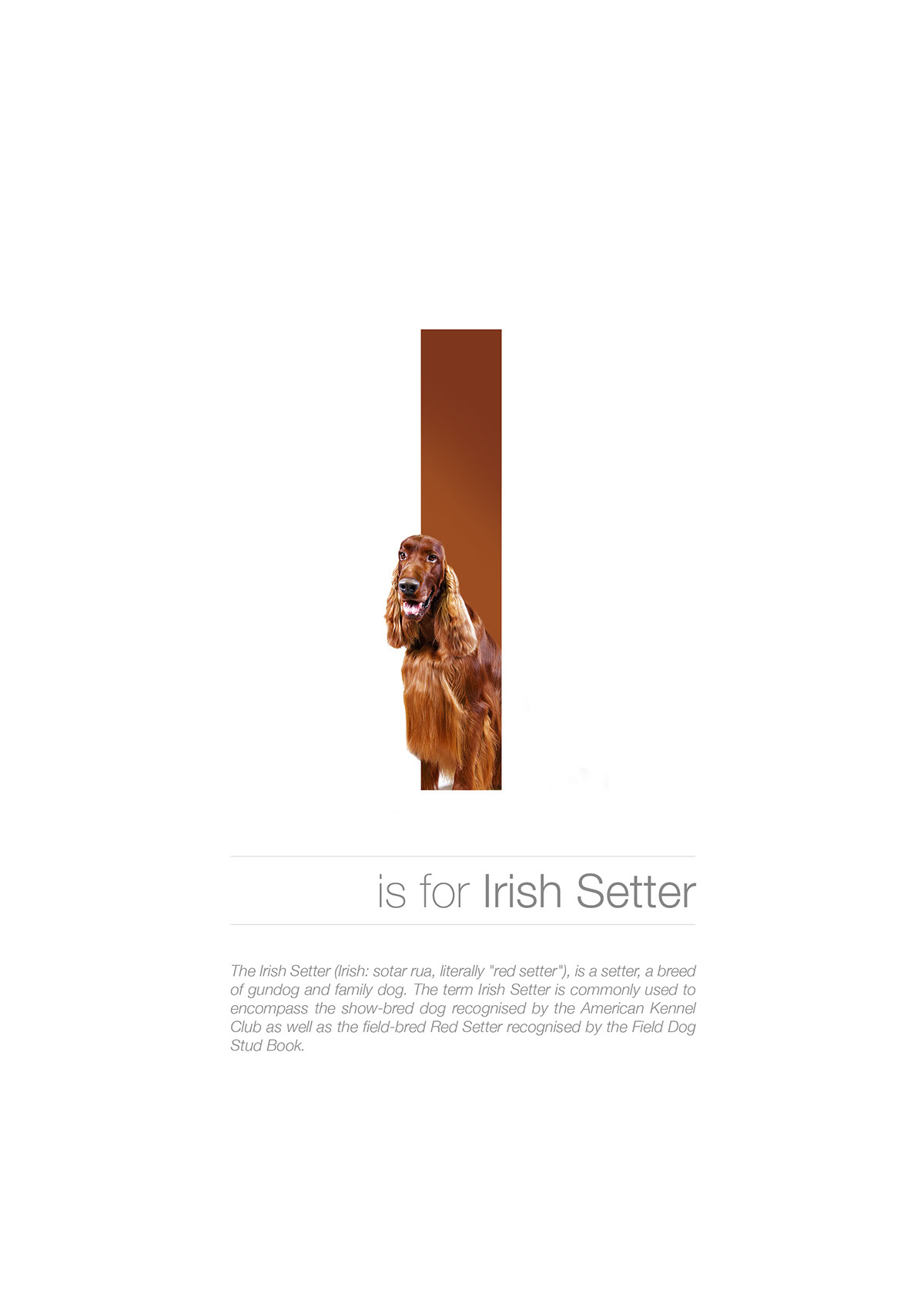 dog posters Breeds alphabet learning letters graphicdesign type