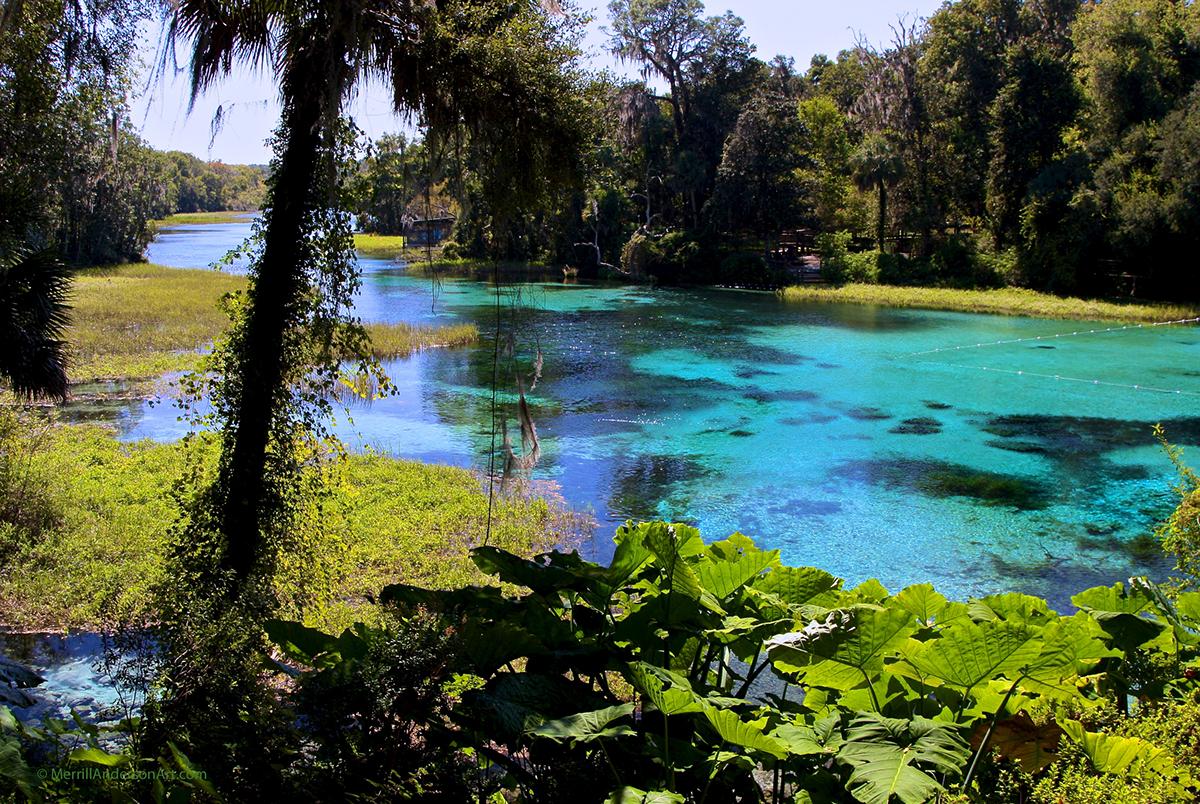 Adobe Portfolio water photos cards springs Nature Murals beauty refreshing