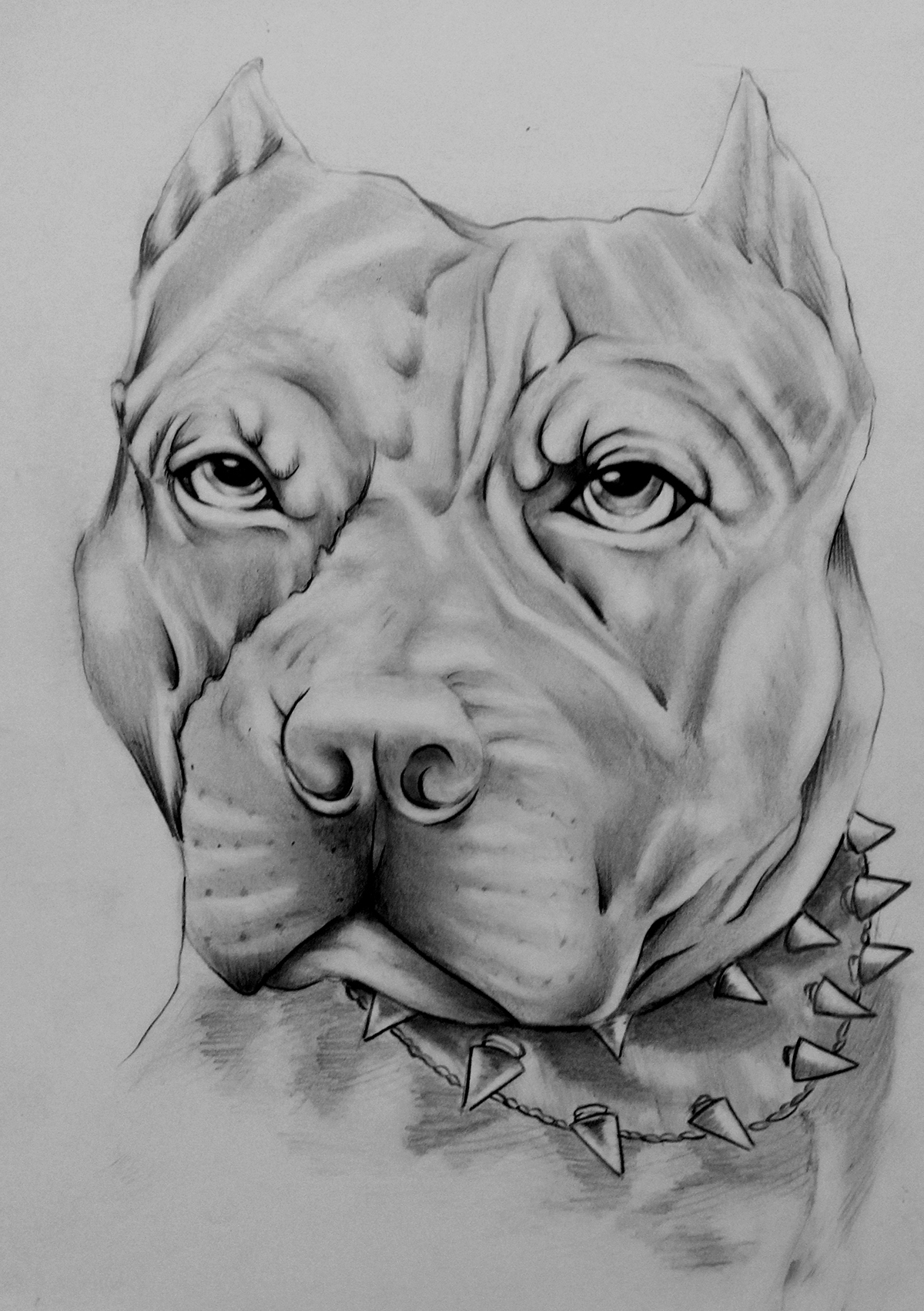 Dibujo De Perro Pitbull Pitbull Drawing On Pantone Canvas Gallery