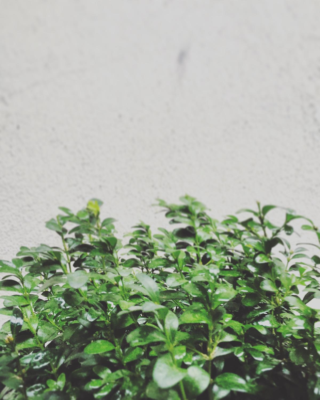 leaf germany Photography  design fotografie