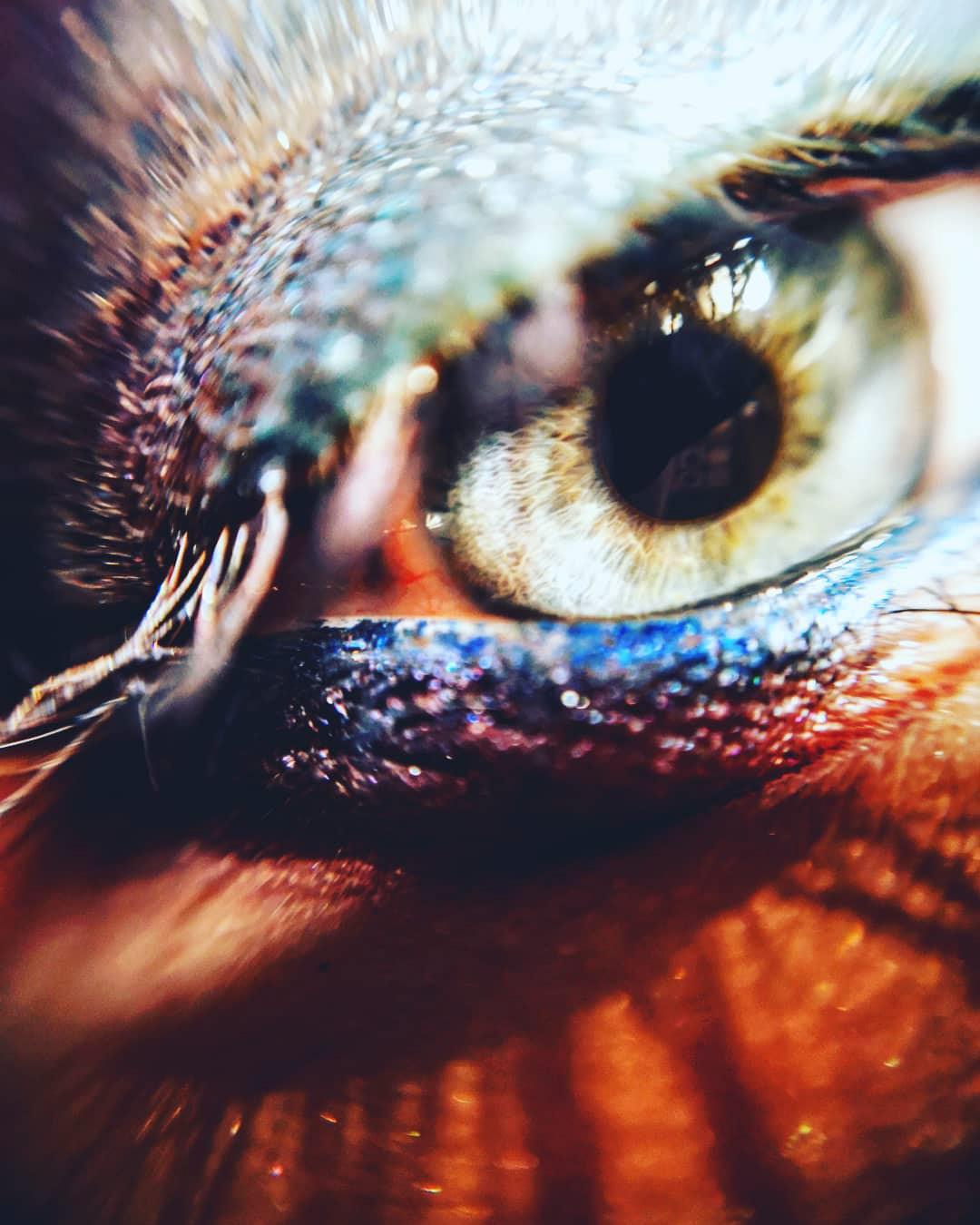 Как фотографировать макияж глаз макро