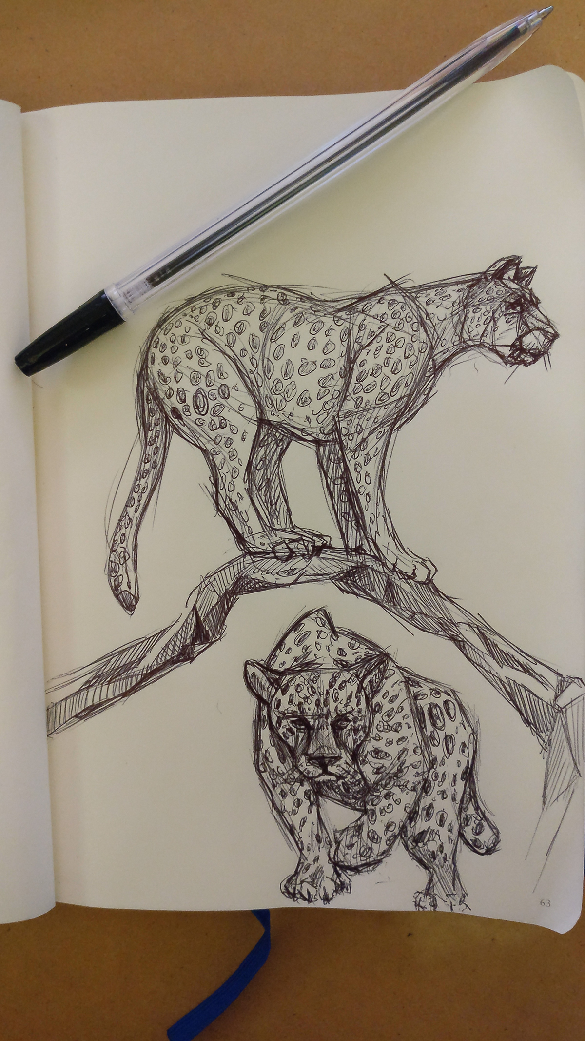 Nature animals Drawing