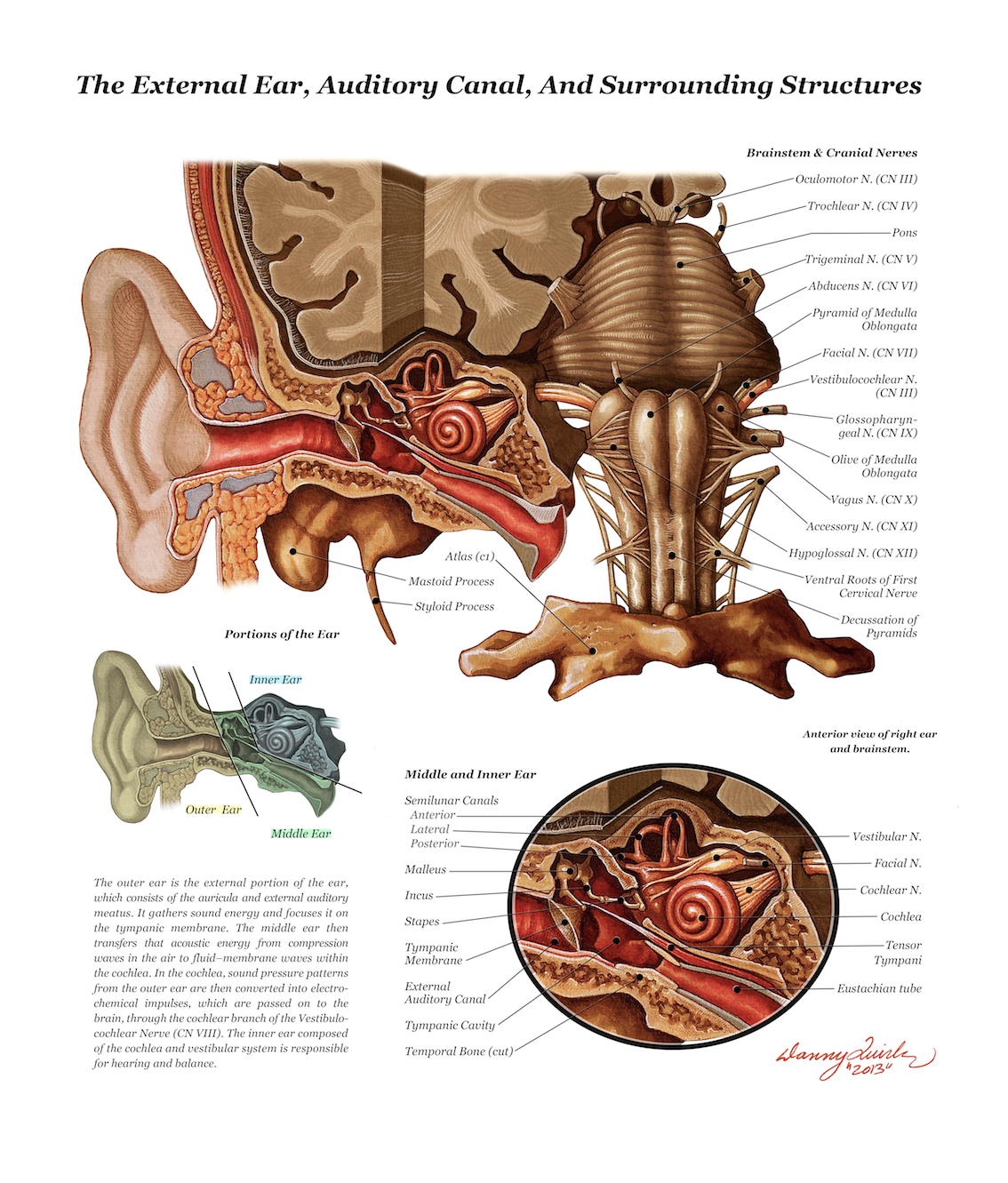 Colorful Anatomy Of The Eustachian Tube Ensign - Human Anatomy ...
