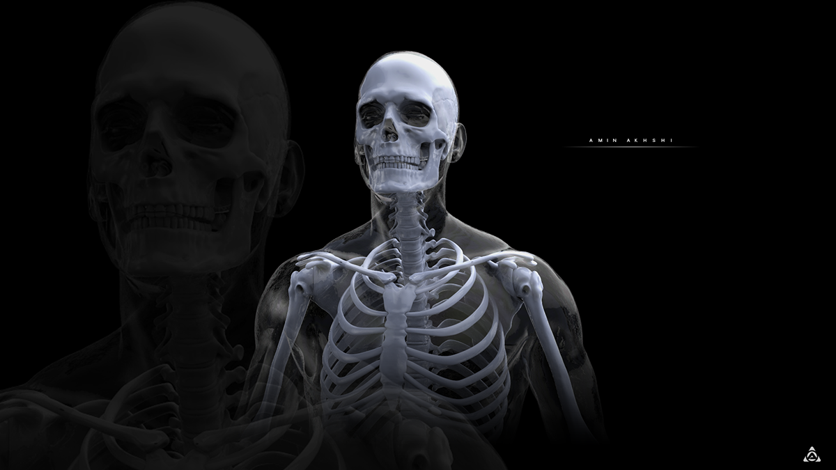 Anatomy Study Human Skeleton On Behance