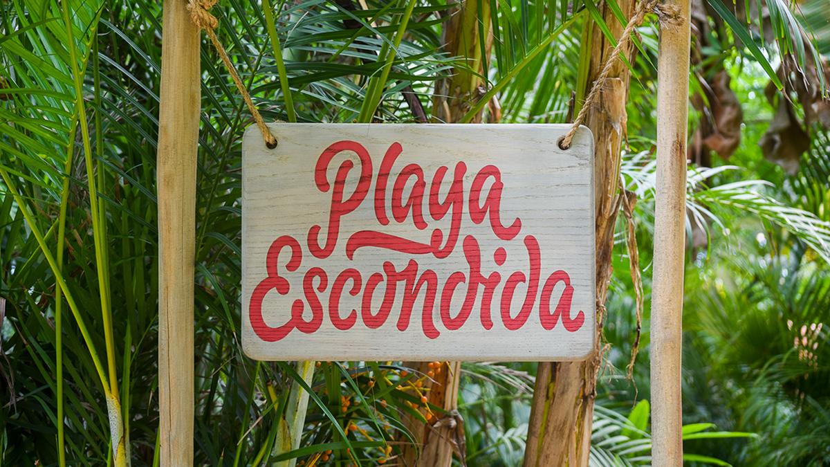 branding  mexico hotel turism colorful Webdesign beach parrot sayulita ILLUSTRATION
