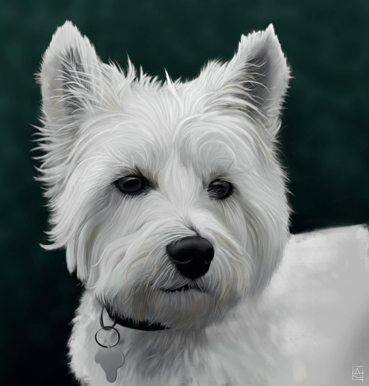 digital art ILLUSTRATION  fine portrait animal wildlife photoshop painting   Illustrator