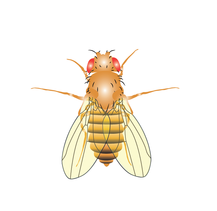an introduction to the behavior of drosophila melanogaster