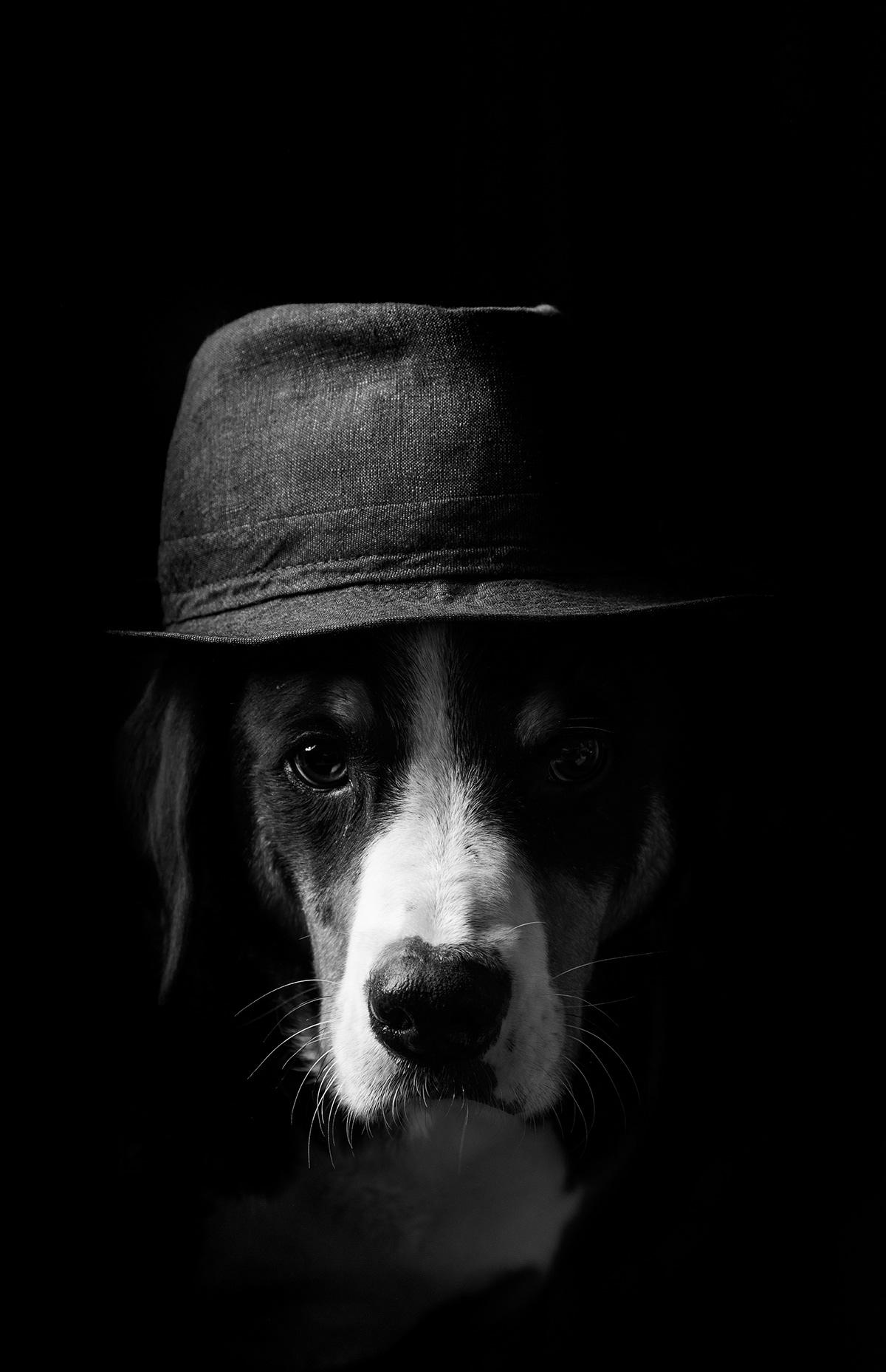 dog lowkey portrait