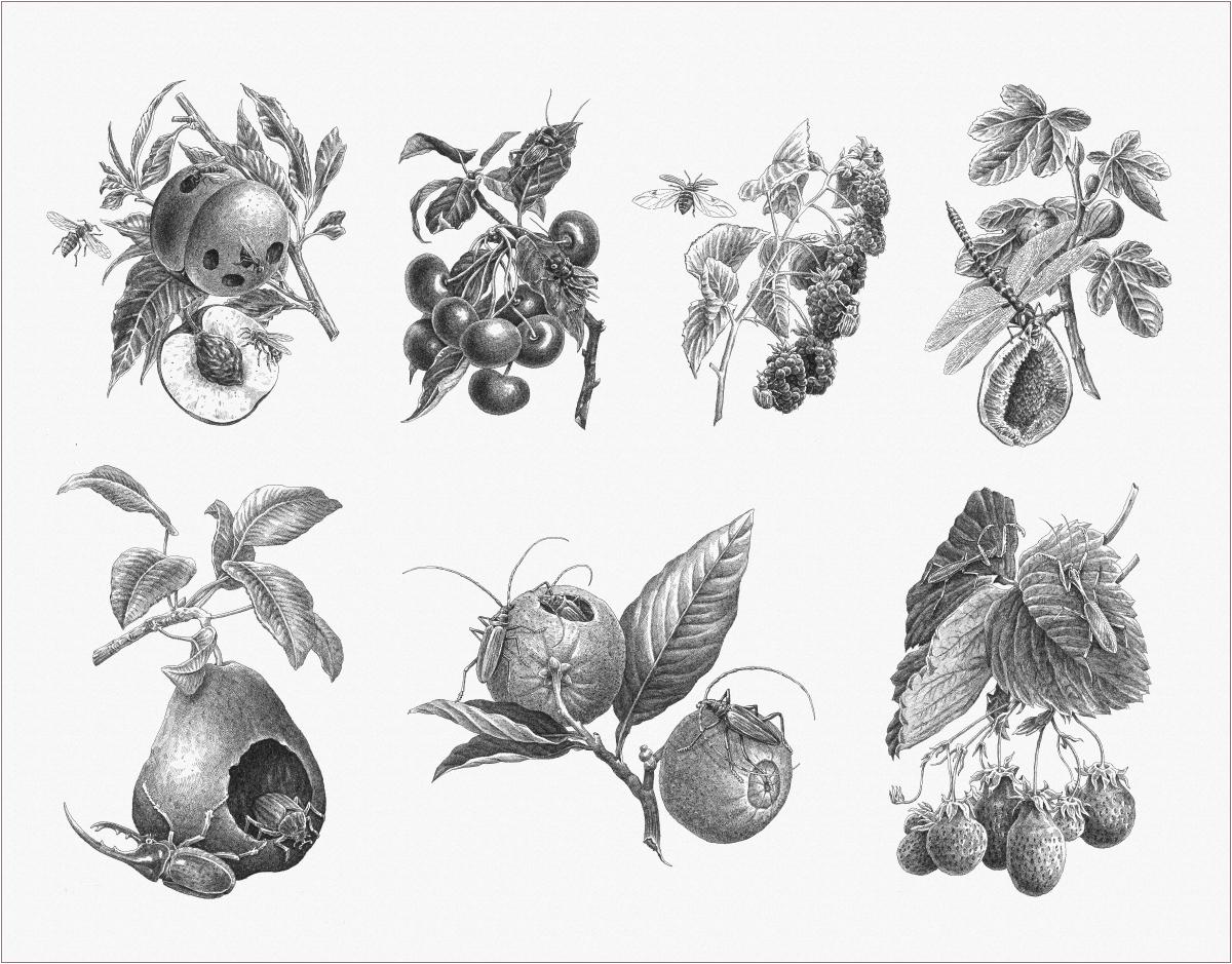 frutivores on behance