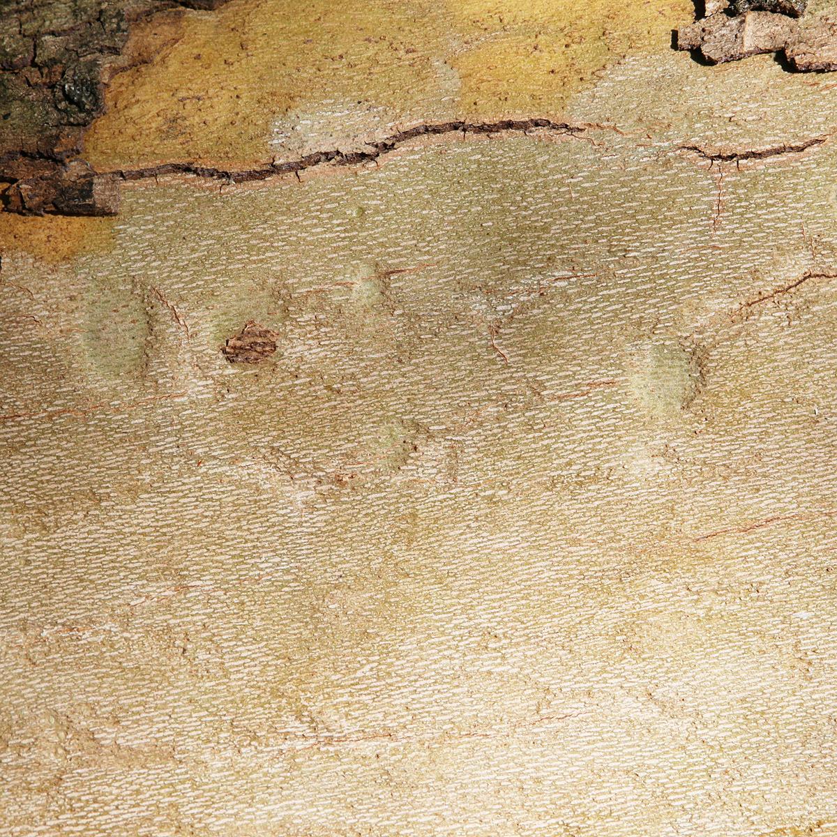 Landscape abstract desert Nature Aerial bark Tree  Volcanoe cave conceptual