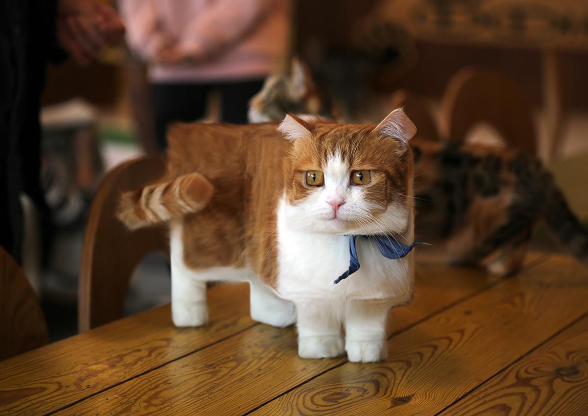Making A Munchkin Cat In Sims