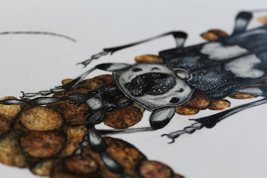insect bug letter alphabet beetle ladybug Nature type font leaf flower Caterpillar scorpion Character design