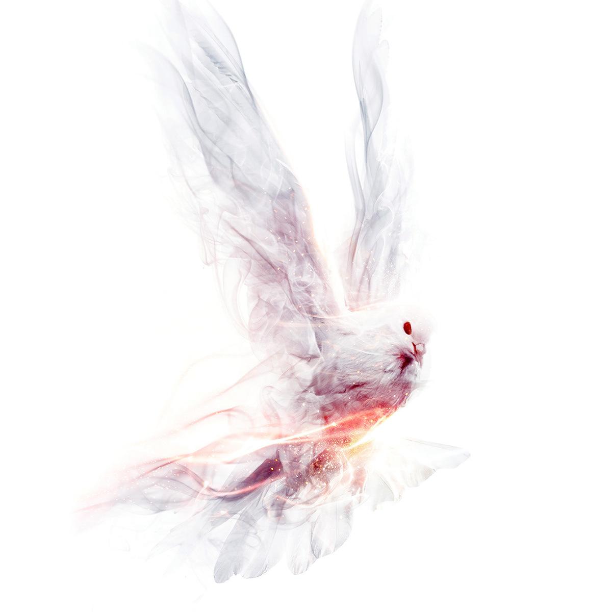 bird hummingbird galaxy cosmos