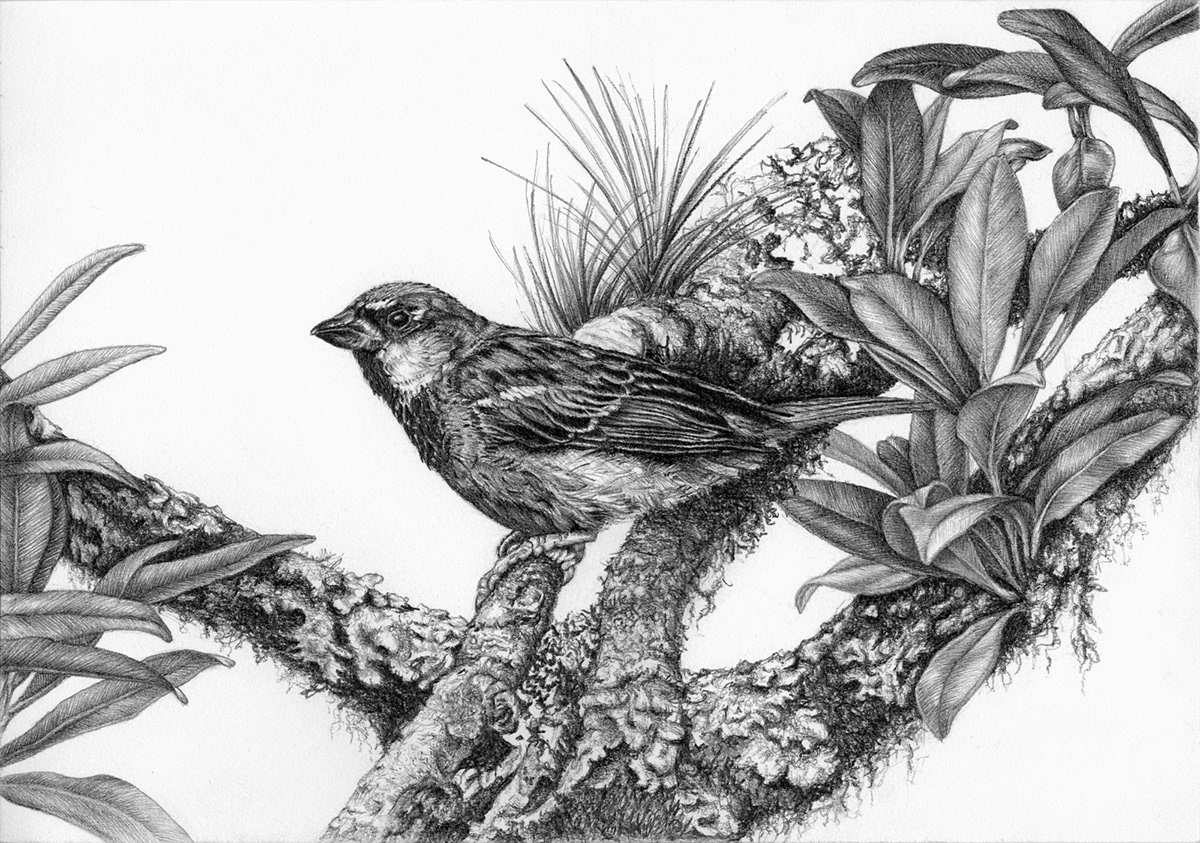 Birds pencil drawings 4 on pantone canvas gallery