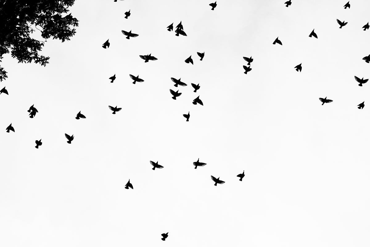 картинки тумблер птицы внимательны состоянию