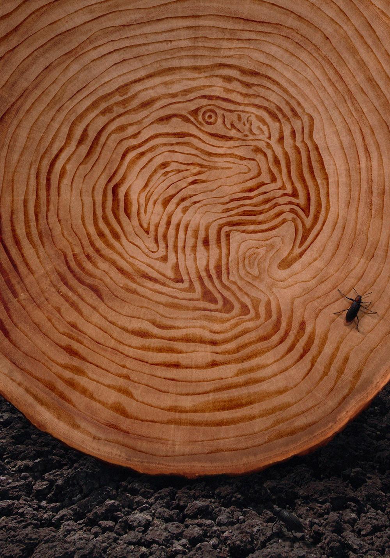 deforestacion arboles animales calentamiento global consumo global warming Deforestation trees extinción Extinction